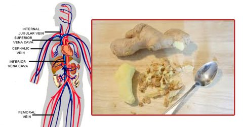 Image of These are the INCREDIBLE things that happen to your body when you start eating ginger every day
