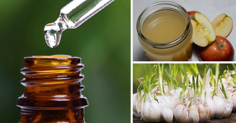 Image of 12 Natural Antibiotics That Our Ancestors Used That Are More Effective Than Pills