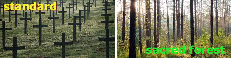 biodegradable-burial-pod-memory-forest-capsula-mundi-7-Optimized