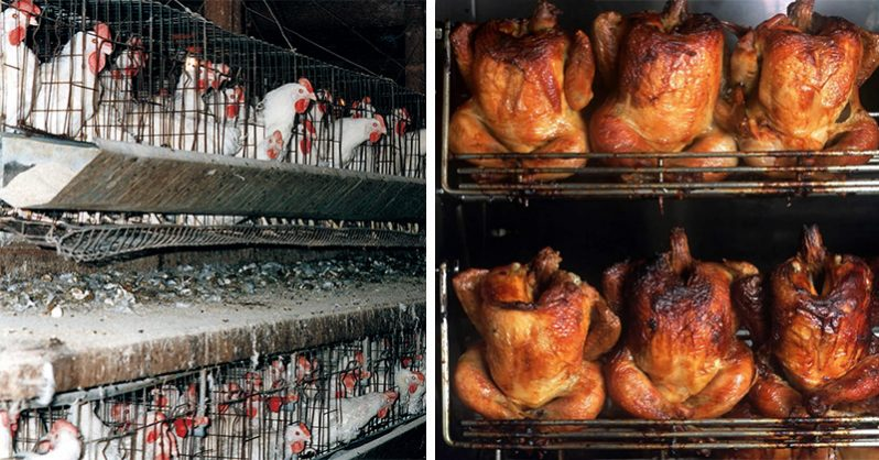Image of 55% of ALL Chicken is Filled with Cancer-Causing Arsenic. Here's EXACTLY how to buy the safe kind