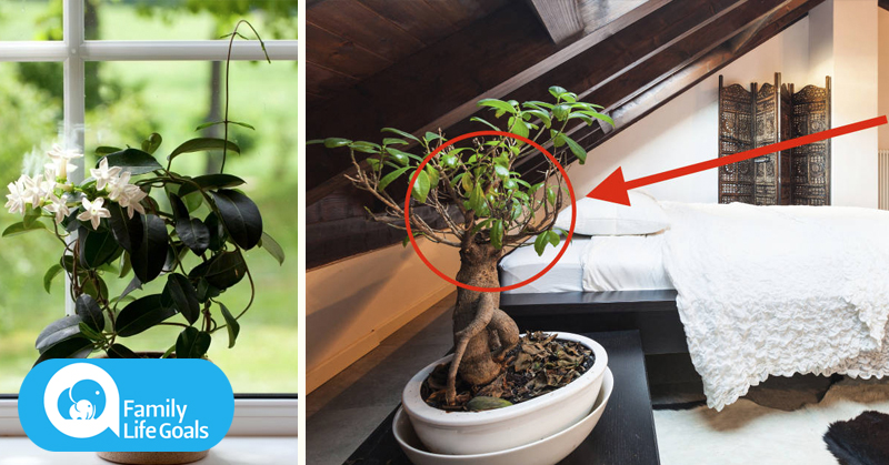 How to improve sleep, air quality and lung health with these 12 plants