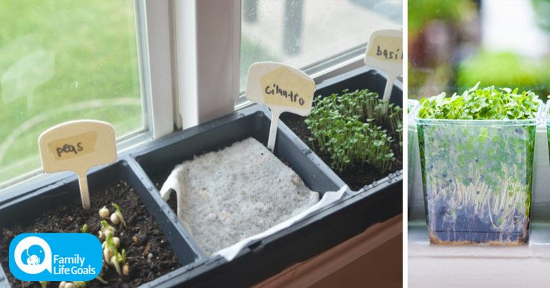 Image of How to grow an endless supply of cancer-fighting plants indoors