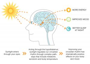 benefits-of-sunlight