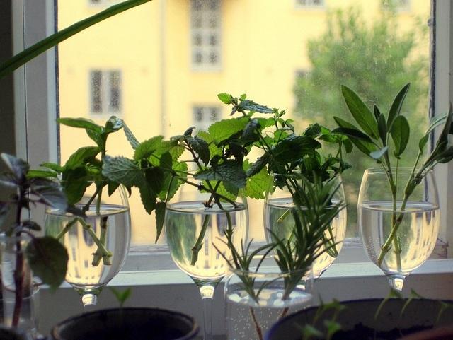 herb-cuttings-flickr