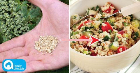 Image of How to grow organic, nutrient-filled quinoa in your garden