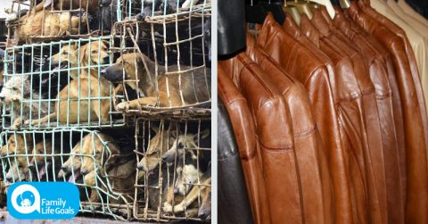 Image of U.S. stores are buying cat and dog skin from China that is disguised as leather