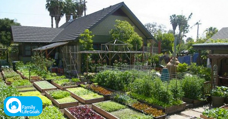 Learn how this family grows 6,000 pounds of food on just 1/10th acre