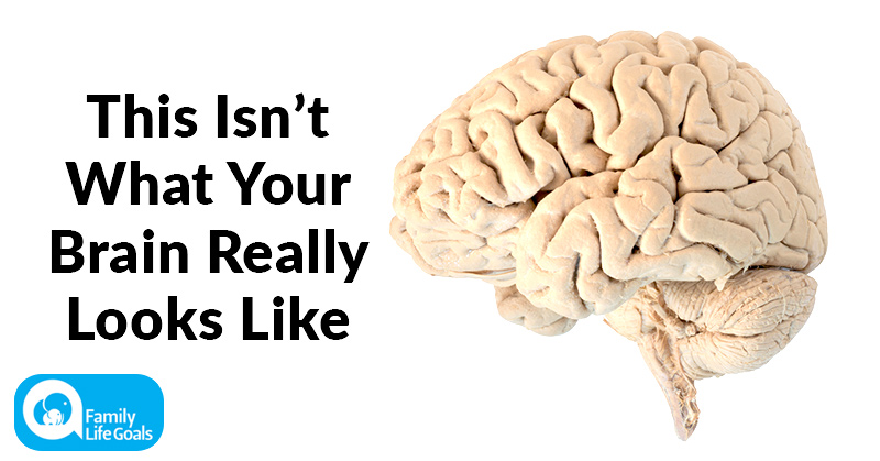 Your Brain Doesn't Look Like How You Think It Does