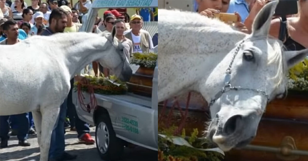 Heartbreaking Moment Grieving Horse Smells Late Owner's Casket And Breaks Down