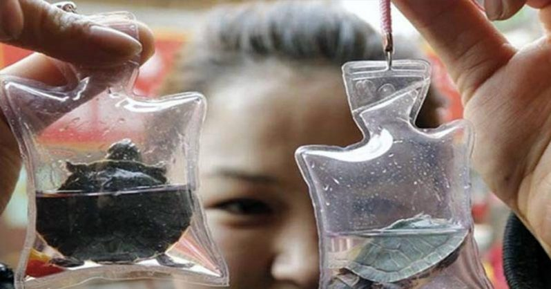 Image of Animals Trapped Alive In Trinkets Sold For $1.50 in China