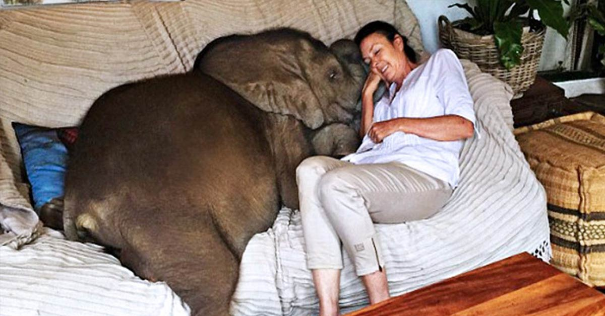 Baby Elephant Insists on Following Her Rescuer After Being Saved from Death