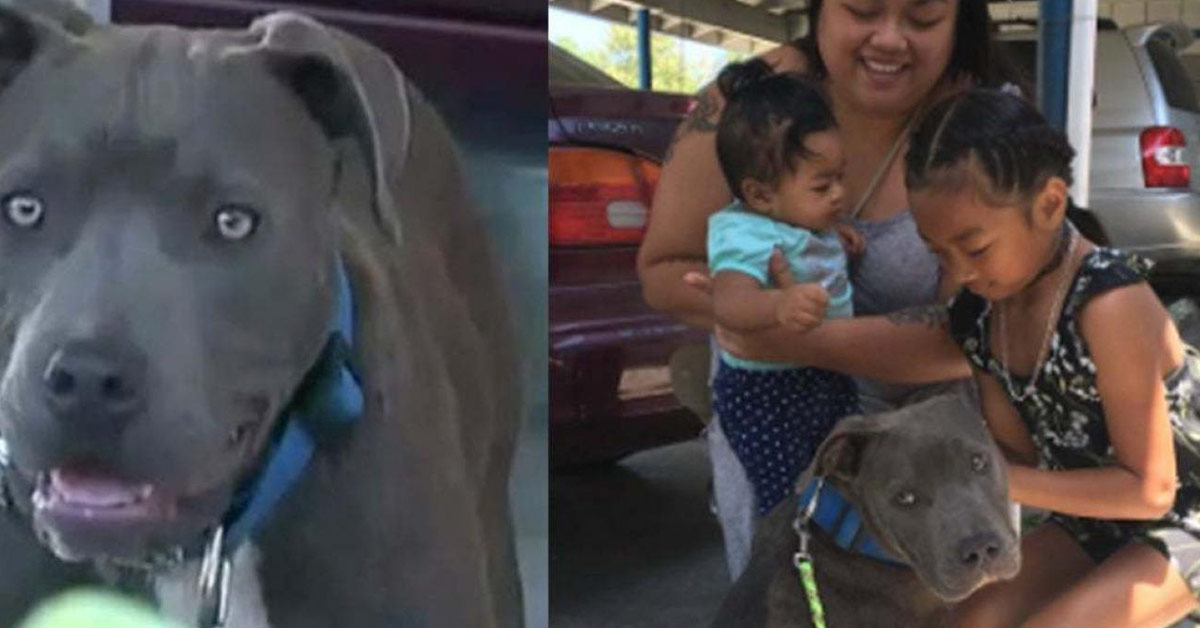 Heroic Pit Bull Saves Family from House Fire, Pulls 7-Month-Old Girl by Her Diaper