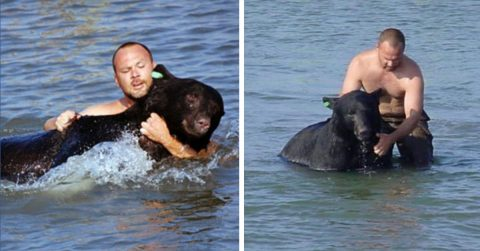 Image of Brave Man Saving Drowning 400-Pound Black Bear Is the Greatest Rescue Story Ever
