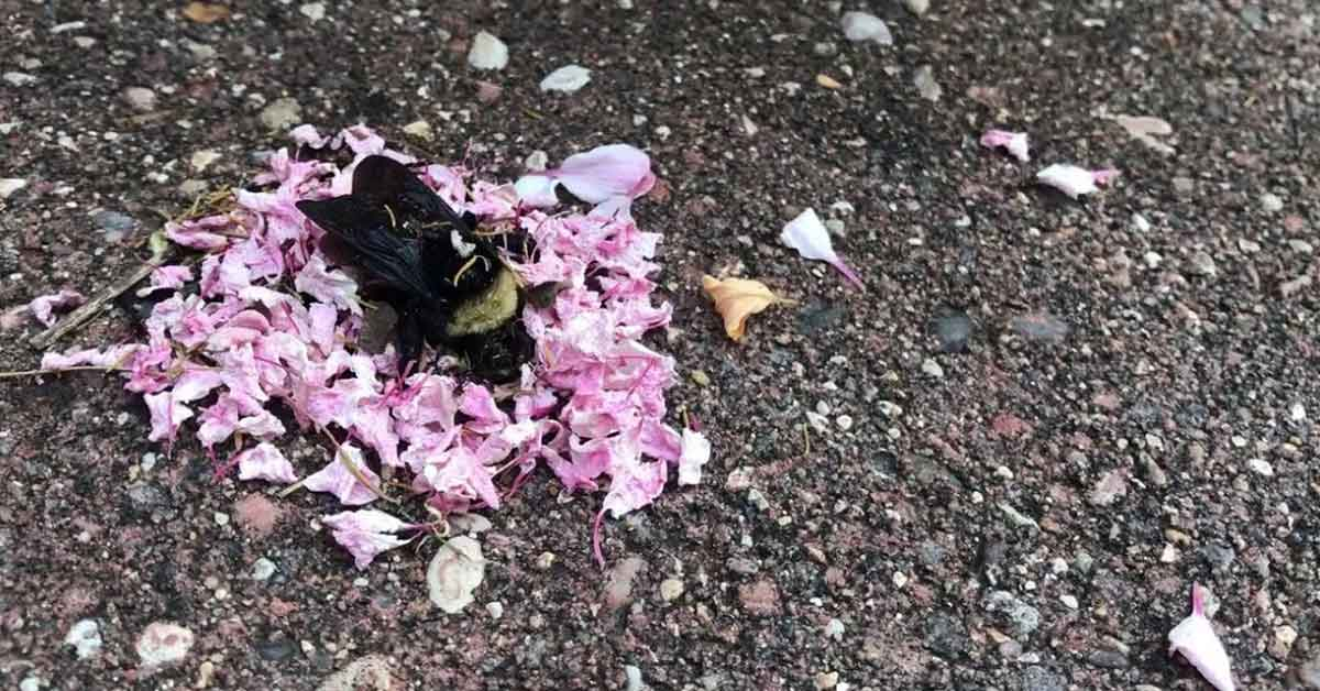 Surprising Video Shows Ants Holding A Funeral For Dead Bumblebee