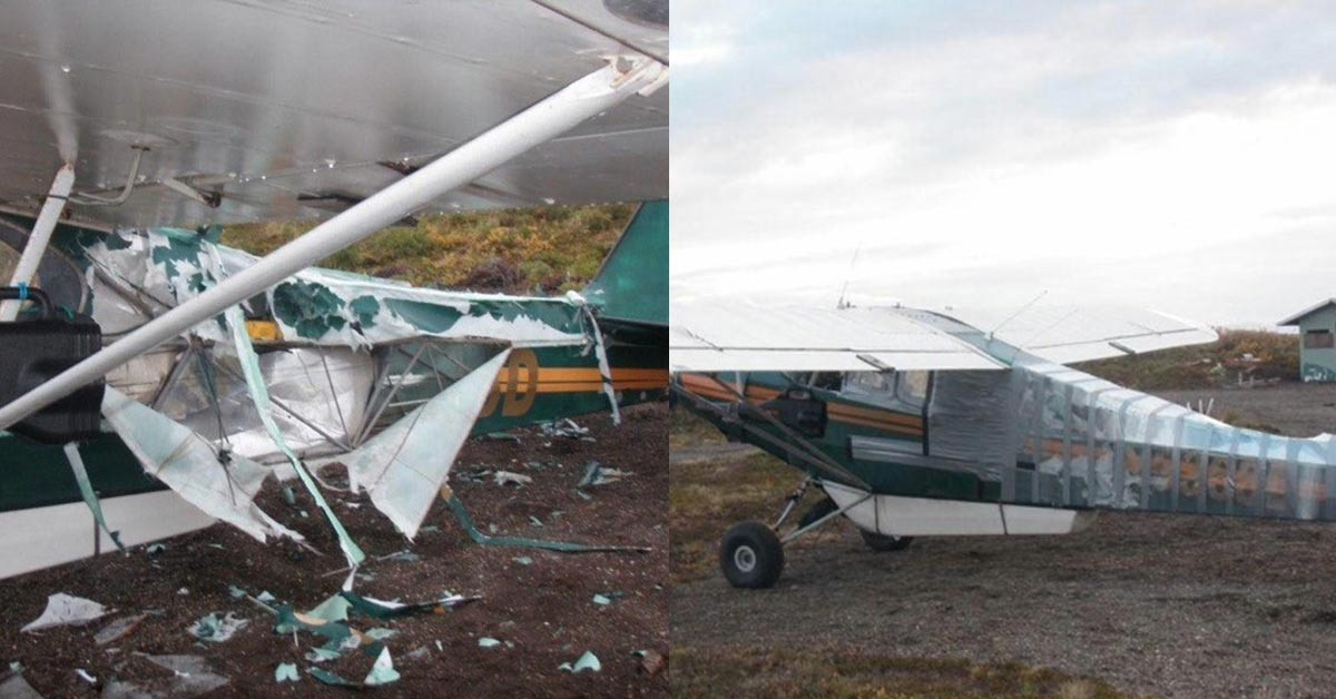 Bear Attacks Plane and Shreds It to Pieces to Get His Hands on Fresh Bait, Pilot Fixes the Damage with Duct Tape and Flies Home
