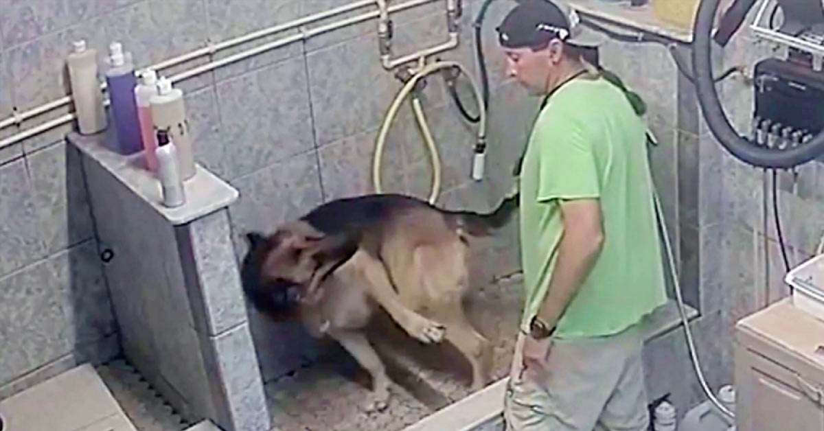 Florida Dog Groomer Arrested After Breaking Service Dog's Tail Because It 'Wouldn't Sit Still'