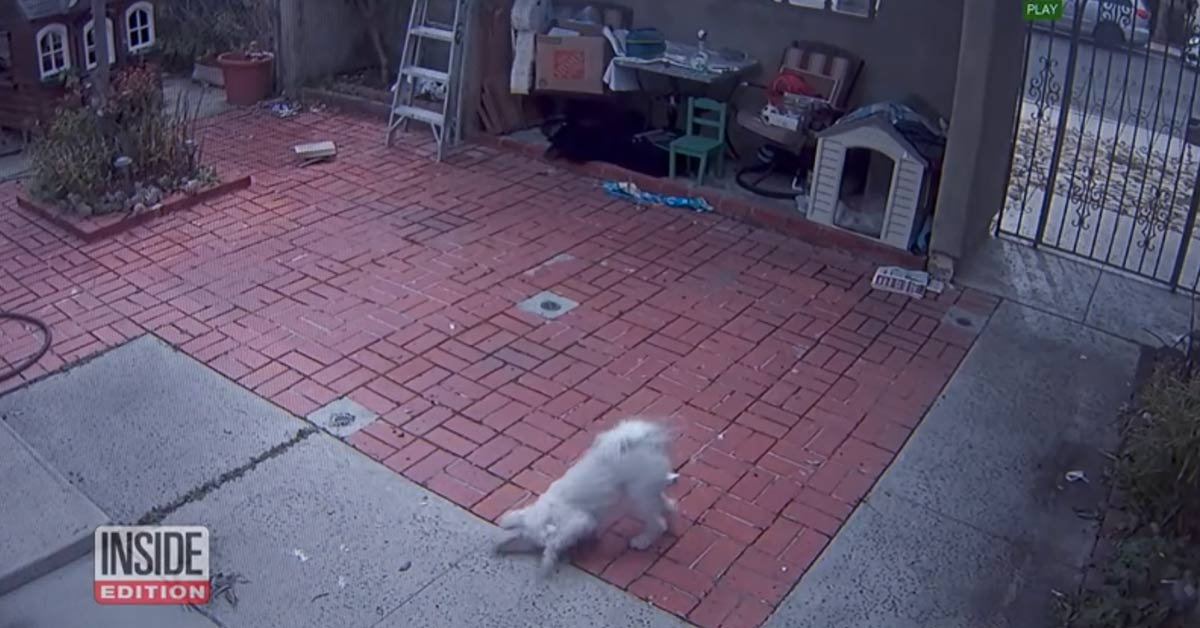 CCTV Footage Shows Mail Carrier Regularly Pepper-Spraying Dog