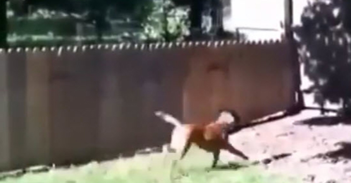 Man finishes his dog fence and takes his dog out for a test run that doesn't go so well