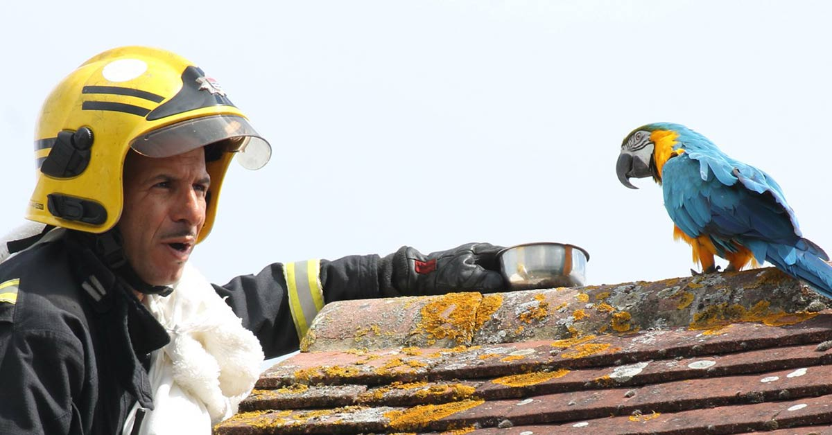 """Parrot Stuck On London Rooftop Tells Firefighter to """"F*** Off"""" During Rescue Attempt"""