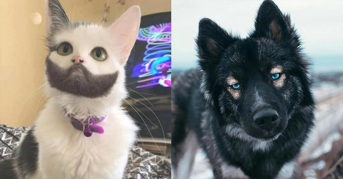 21 Animals Who Got The Right Kind Of Mutations