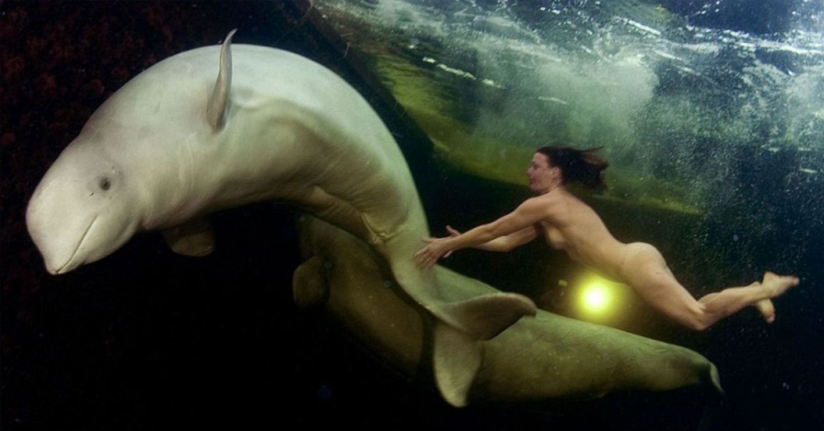 Princess of Whales: The Incredible Story Of The Female Scientist Who Tried To Tame Belugas In The Freezing Waters Of The Arctic While Naked
