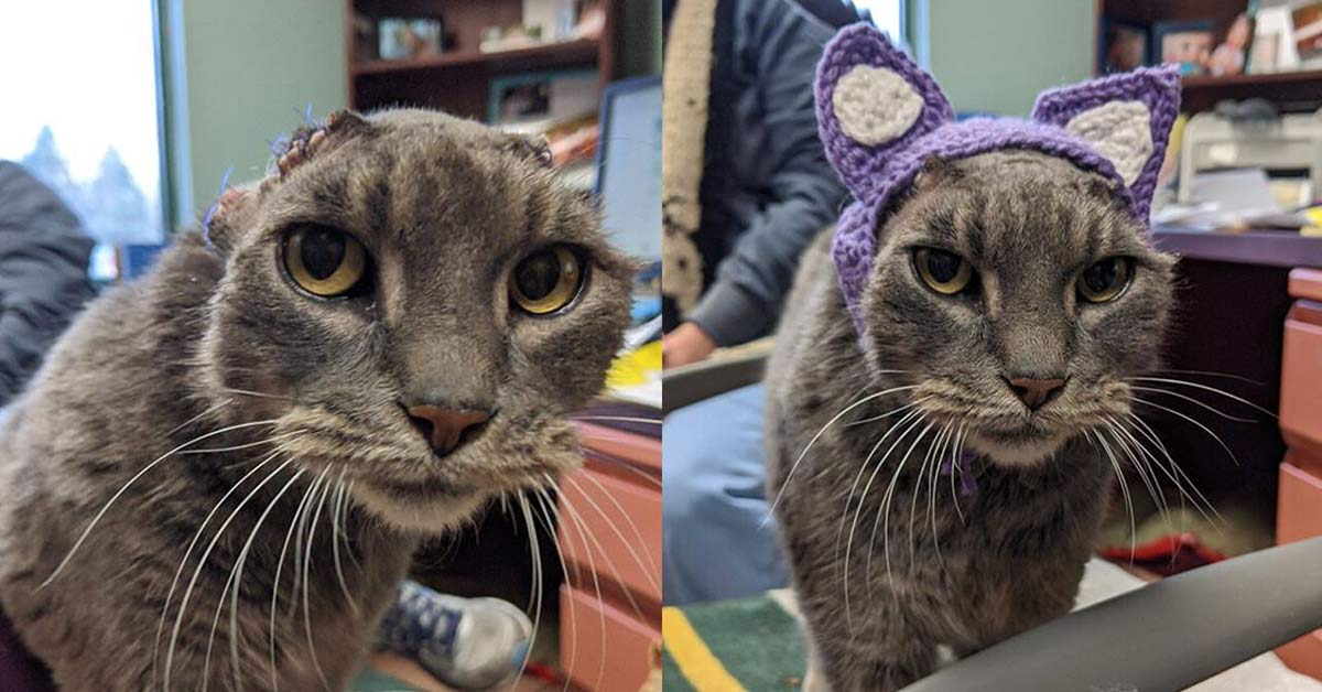 Stray cat with crocheted ears gets her happily ever after