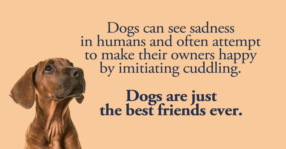 7 Great Reasons Why Dogs Truly Are Man's Best Friend