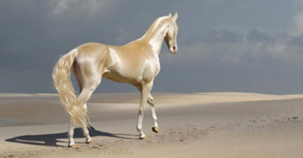 """The Akhal-Teke Horse, Rightly Called the """"World's Most Beautiful Horse"""" Looks Like it's Made from Gold"""
