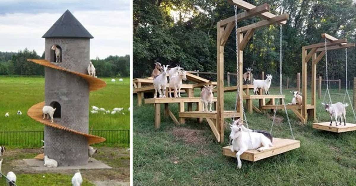 Goats Are as Loving and Clever as Dogs, Study Shows