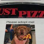 Pizza Place Helps Local Shelter Get Dogs Adopted By Putting Their Photos On Pizza Boxes