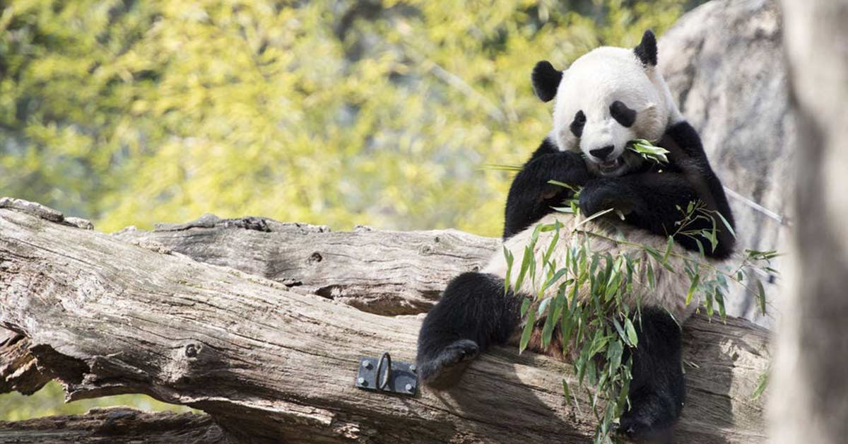 Thanks To Live Cams, You Can Enjoy Live Videos of Puppies, Bears, Giraffes, and More Animals