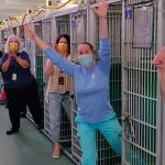 Florida Animal Shelter Celebrates Empty Kennel For The First Time Ever