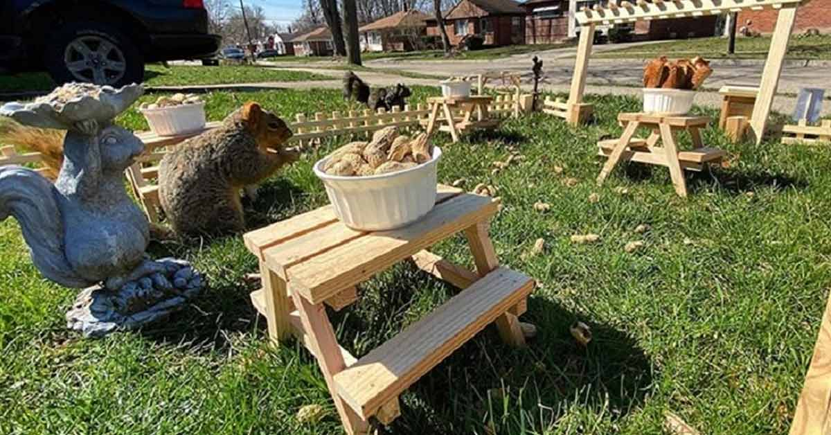 Bored Guy in Quarantine Builds a Restaurant for the Squirrels in His Yard