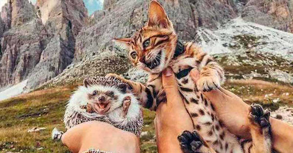 The Amazing Friendship between This Hedgehog and Bengal Kitten Will Surely Brighten Your Day