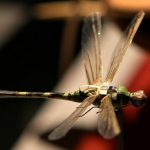 All About the Insectothopter, CIA's Dragonfly UAV from the 1970s