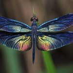 Dragonflies Carry A Deep And Significant Meaning: Do You See Them Often?