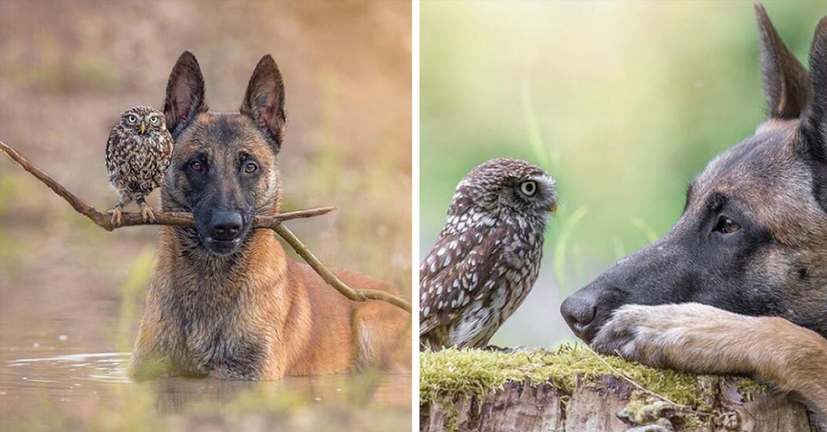 This Tiny Owl Was Adopted By A Dog And Their Pictures Will Certainly Make Your Day