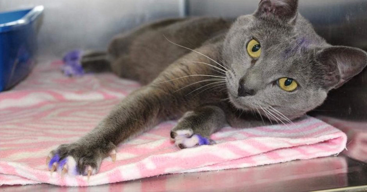 If You See A Cat With Purple Paws, Pick It Up And Take It To The Nearest Shelter. It's Being Used As Dog-fighting Bait