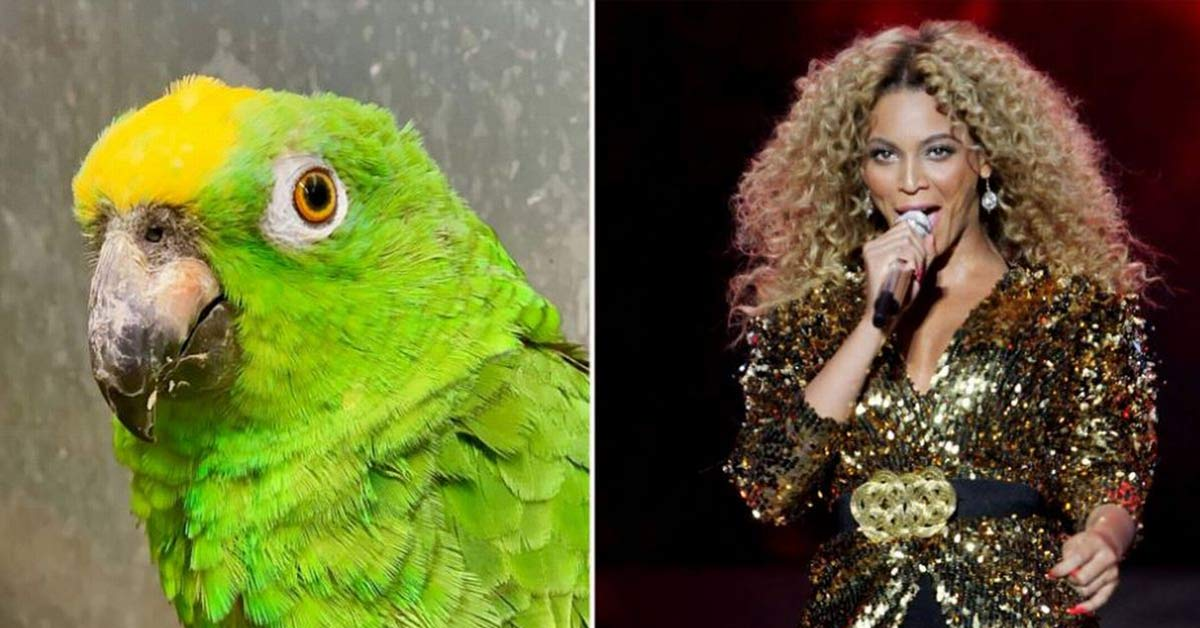 The Sassy Singing Parrot Actually That Thinks It's Beyoncé