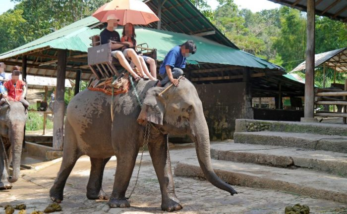 asian_elephant_being_ridden_blurred_1200x750